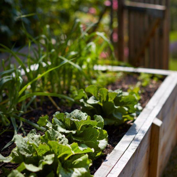 création potager jardin ardèche